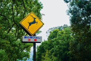 Znak drogowy zwierzęta